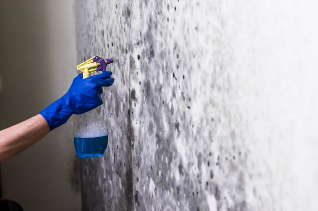 mold removal san antonio texas